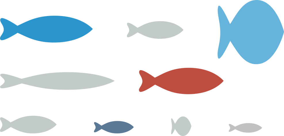 Infographic fish in different sizes