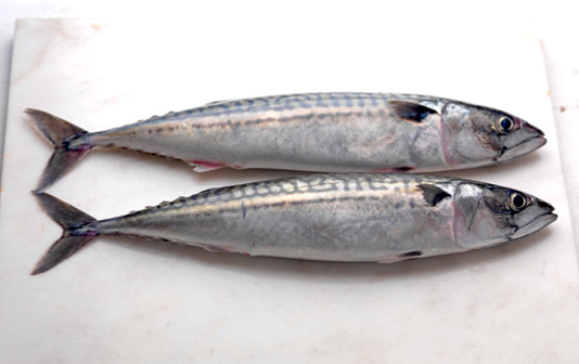 Two whole mackerel